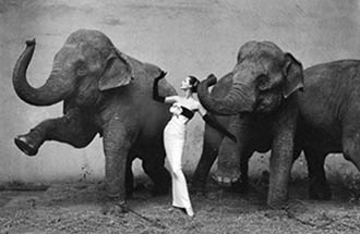 avedon-elephant-picture crop