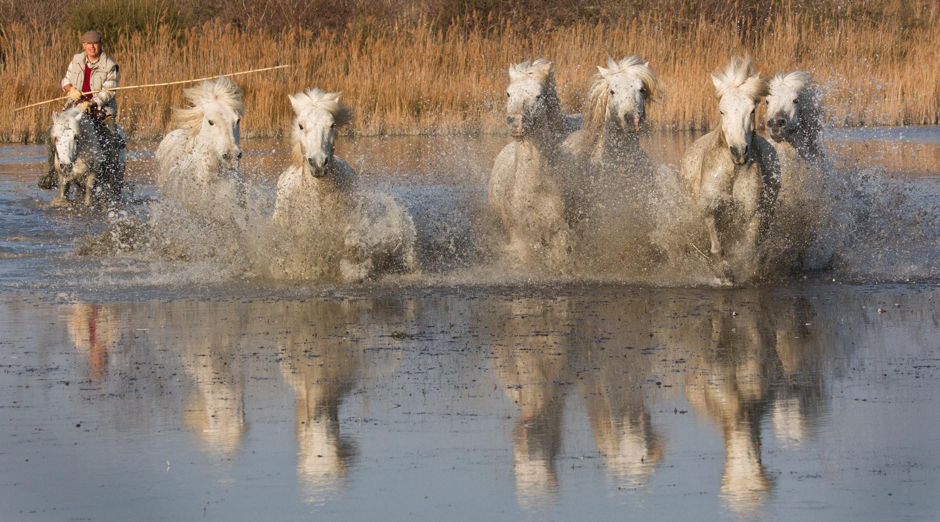 © Marie-Laure-Stone-United Kingdom-Splashing Horses